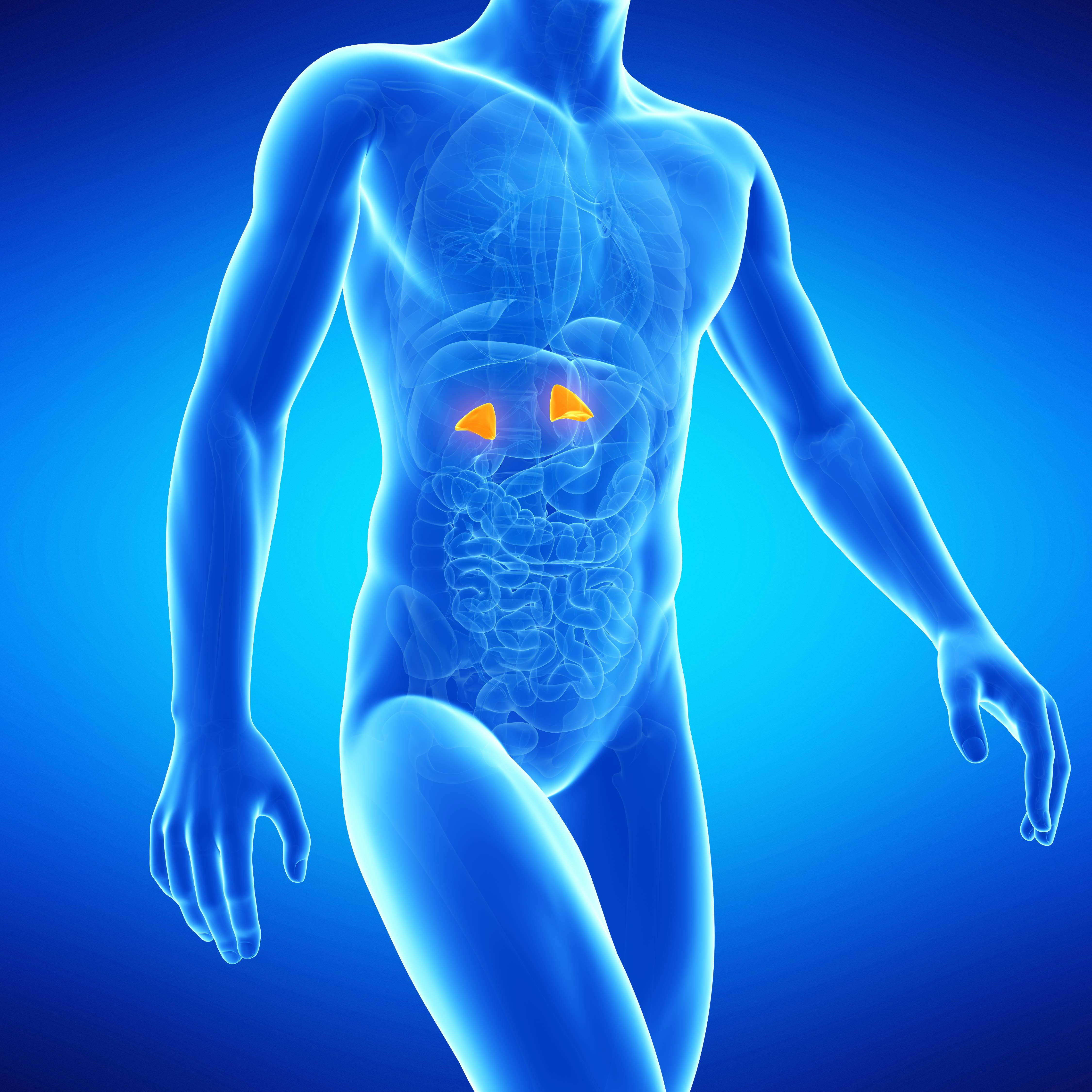Adrenal Health Part Two Adrenal Glands And The Body Seventh Day